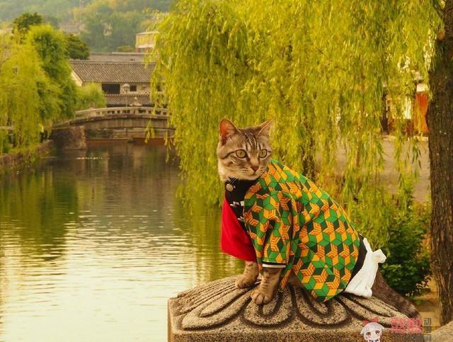 【动漫趣闻】可爱猫咪玩《鬼灭之刃》cosplay角色扮演,炭治郎跟祢豆子的互动令人遐想