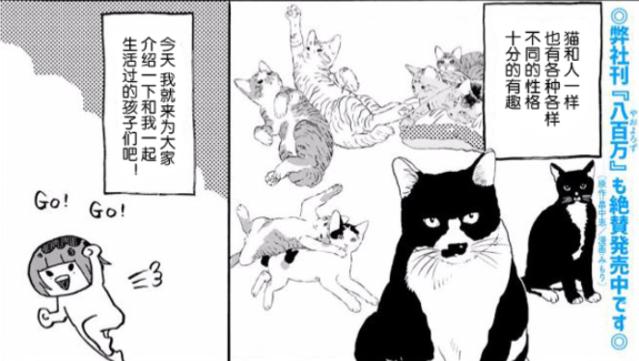 みもり治愈小短篇「猫咪超可爱!!」